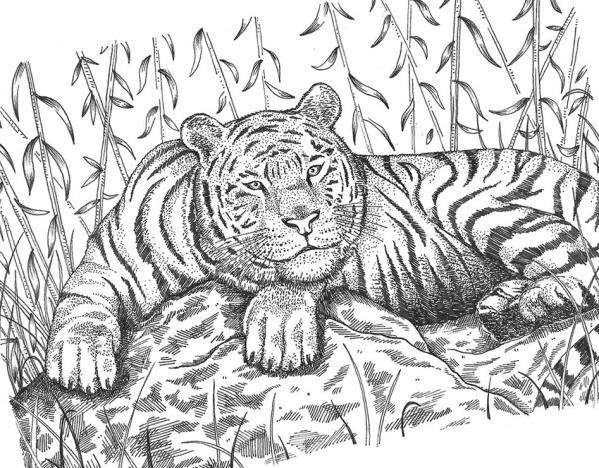 tiger naomi smith